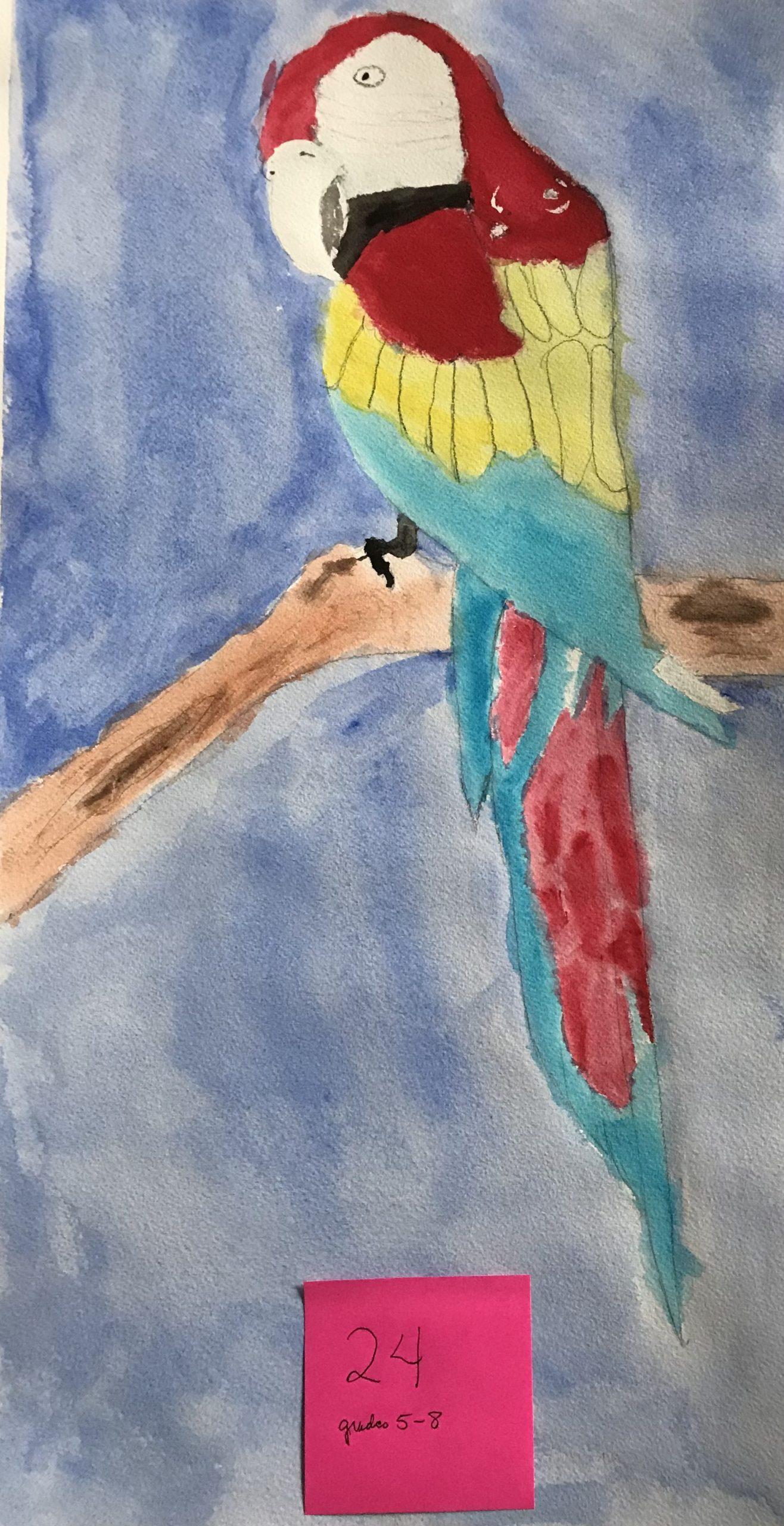 YAC 2020 #24 5-8 Macaw