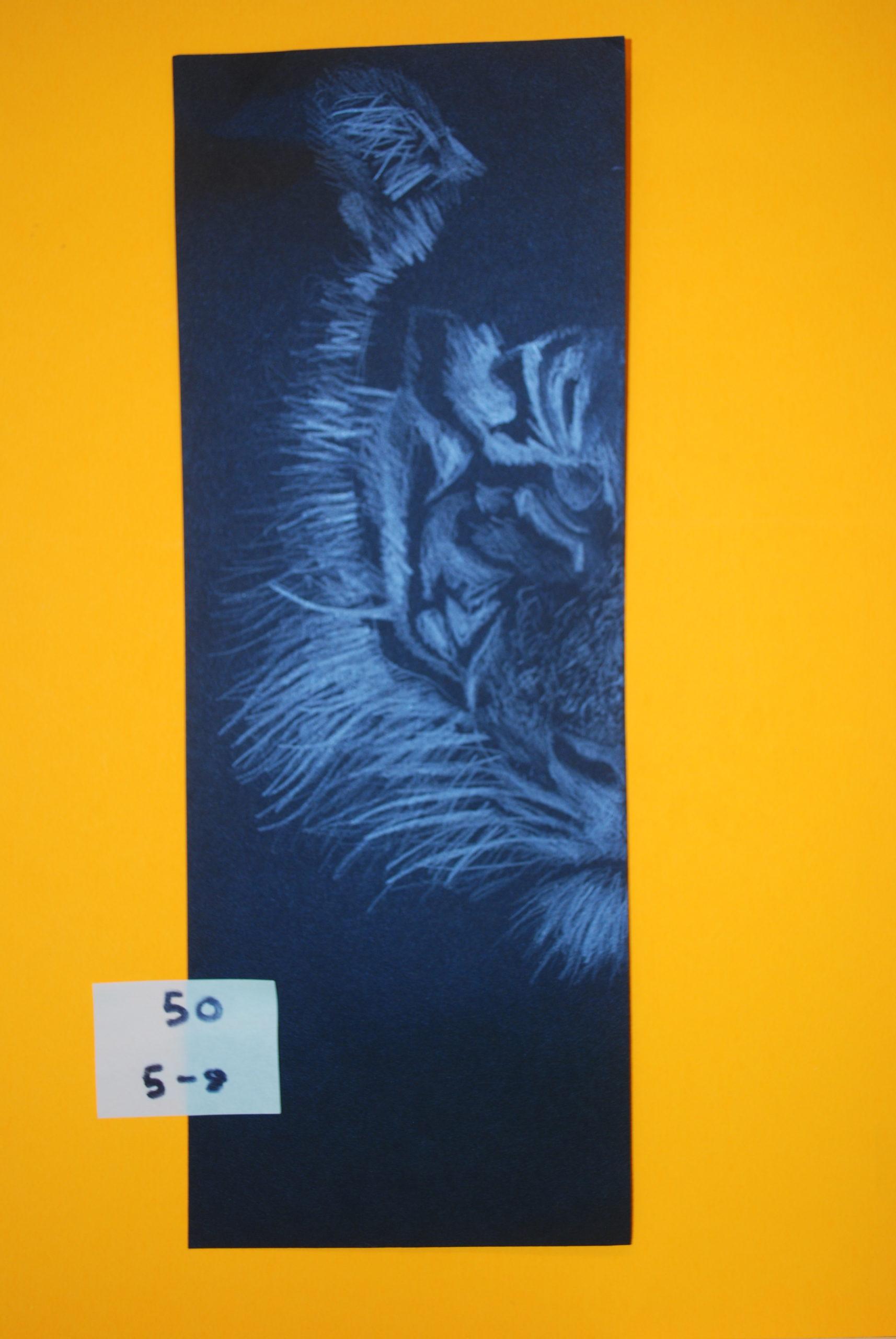 YAC 2020 #50 5-8 Black Tiger Face a