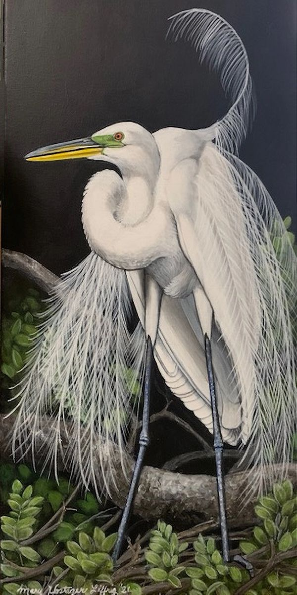 Great White Egret by Mary Liffrig (Acrylic)